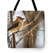 Cedar Waxwing Pictures 52 Tote Bag