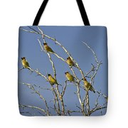 Cedar Waxwings Tote Bag