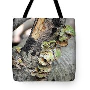 Violet-toothed Polypore Tote Bag
