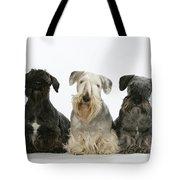 Cesky Terrier Dogs Tote Bag