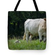 Charolais Cow And Calf In Field Tote Bag
