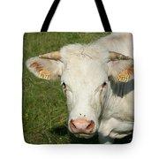 Charolais Cow Tote Bag