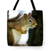 Chatty Squirrel Tote Bag