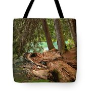 Cheakamus Lake Rainforest - British Columbia Tote Bag
