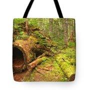 Cheakamus Old Growth Cedar Stumps Tote Bag