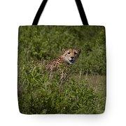 Cheetah   #0095 Tote Bag