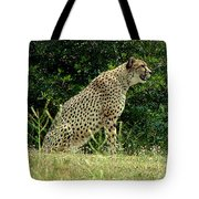 Cheetah-79 Tote Bag