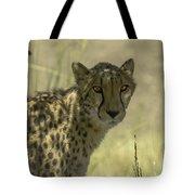 Cheetah Gaze Tote Bag