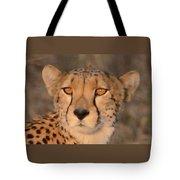 Cheetah Gaze At Sunset Tote Bag