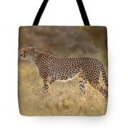 Cheetah In Grassland Kenya Tote Bag