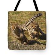 Cheetah Juveniles Playing Tote Bag