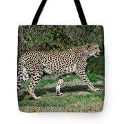 Cheetah Strolling Tote Bag