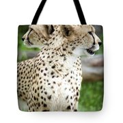 Cheetah's 04 Tote Bag
