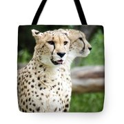 Cheetah's 05 Tote Bag