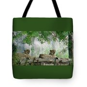 Cheetahs-120 Tote Bag