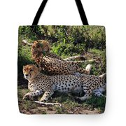 Cheetahs Of The Masai Mara Tote Bag