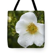 Cherokee Rose With Rain Drops Tote Bag