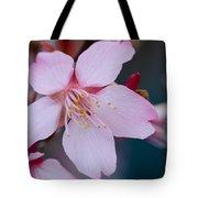 Cherry Blossom Special Tote Bag