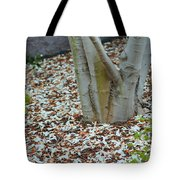 Cherry Blossoms 2013 - 002 Tote Bag