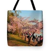 Cherry Blossoms 2013 - 007 Tote Bag