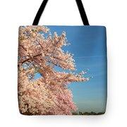 Cherry Blossoms 2013 - 014 Tote Bag