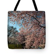 Cherry Blossoms 2013 - 038 Tote Bag