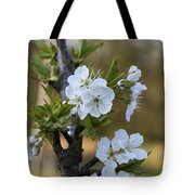 Cherry Blossoms In White Tote Bag