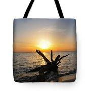 Chesapeake Bay Driftwood At Sunset Tote Bag