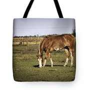 Chestnut In The Pasture Tote Bag