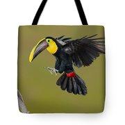 Chestnut-mandibled Toucan Landing Tote Bag