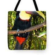 Chestnut Mandibled Toucan Tote Bag