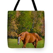 Chestnut Red Horse Tote Bag