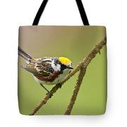 Chestnut-sided Warbler Pictures 49 Tote Bag