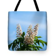 Chestnut Tree Blossoms - Featured 2 Tote Bag