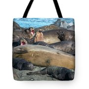 Chick Of King Penguin, Aptenodytes Tote Bag