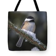Chickadee On The Spruce Tote Bag