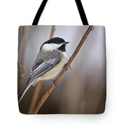 Chickadee Pictures 316 Tote Bag