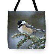 Chickadee Pictures 521 Tote Bag