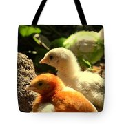 Cute Chicks Tote Bag