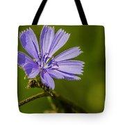 Chicory Tote Bag