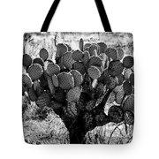 Chihuahua Desert Cactus Bw Tote Bag