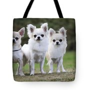 Chihuahua Dogs Tote Bag