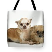 Chihuahua Puppy Dogs Tote Bag