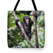 Chimpanzee Baby Eating A Leaf Tanzania Tote Bag