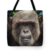 Chimpanzee Male Tote Bag