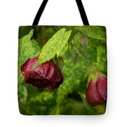 Chinese Lanterns Refreshed By The Rain Tote Bag