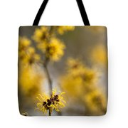 Chinese Witch Hazel Tote Bag