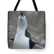 Chinstrap Madness... Tote Bag