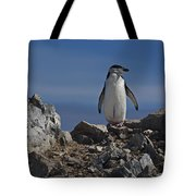 Chinstrap On The Look Out.. Tote Bag
