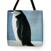 Chinstrap Penguin Tote Bag